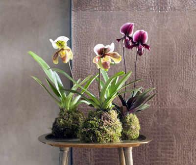 majestueuses orchid es des fleurs qui durent. Black Bedroom Furniture Sets. Home Design Ideas