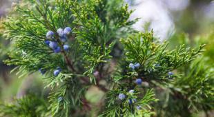 plante nouvel an hiver