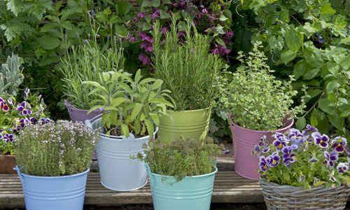 Jardiner malin jardinage et recettes de saison for Conseil en jardinage