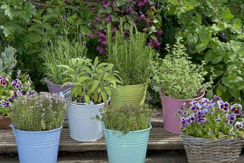 Plantes à cultiver pour se soigner naturellement