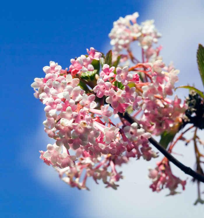Les fleurs parfum es en hiver - Fleurs en hiver ...