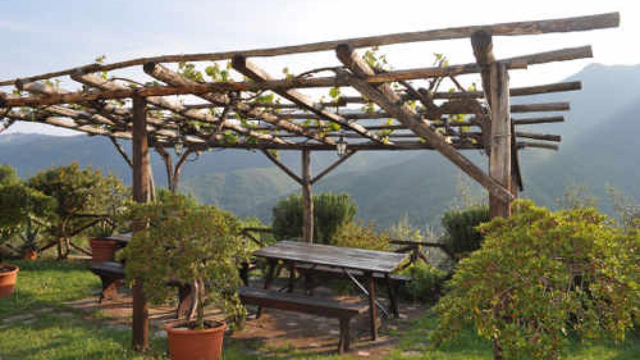 Fabriquer Une Tonnelle En Bois plantes grimpantes pour pergola