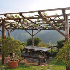 plantes grimpantes pour pergola. Black Bedroom Furniture Sets. Home Design Ideas