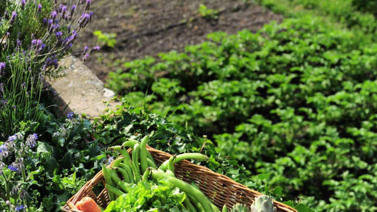 Legumes A Mettre Dans Le Jardin bonnes associations des légumes au potager