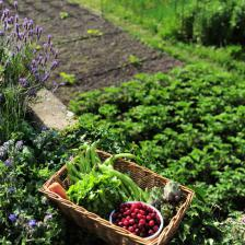 Companion planting, preparing the vegetable patch