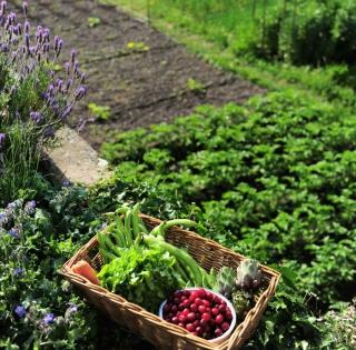 association legumes