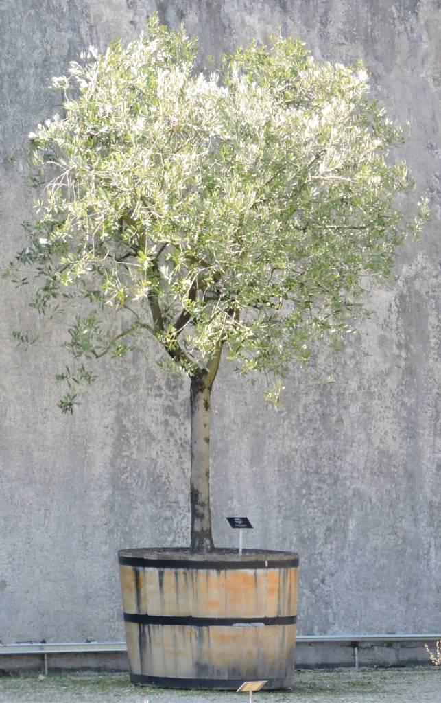 Drought resistant pot arrangements