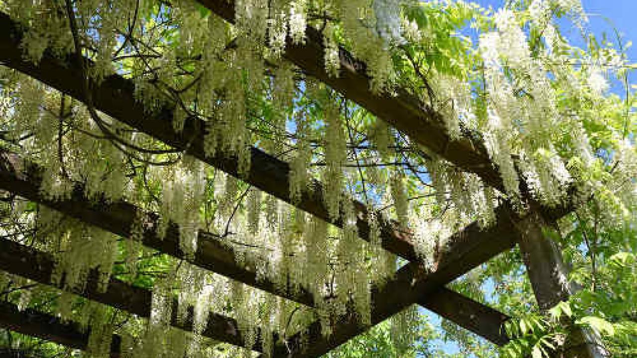 Sur Quoi Poser Un Abri De Jardin plantes grimpantes pour abri de jardin et pergolas