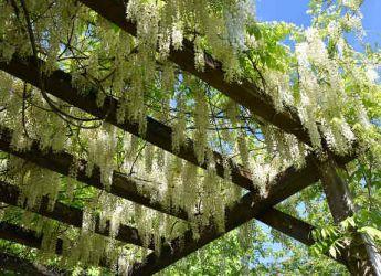 Plantes Grimpantes Pour Abri De Jardin Et Pergolas