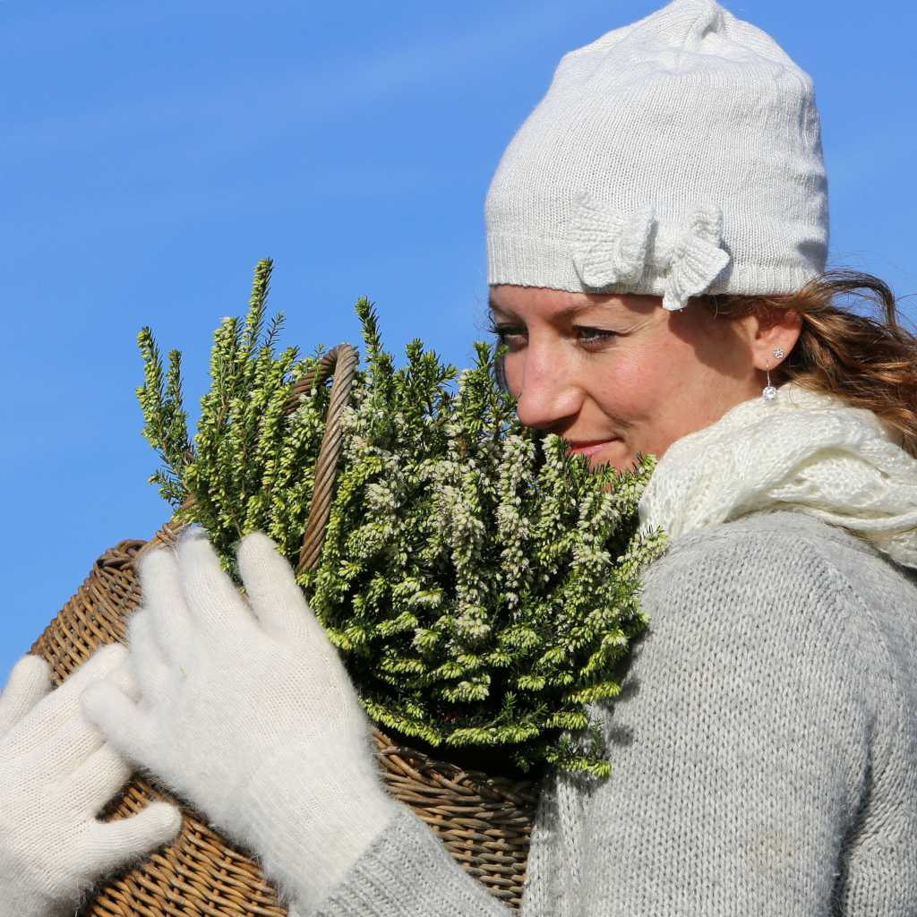 Erica heather is perfect for pots and baskets and carried around.