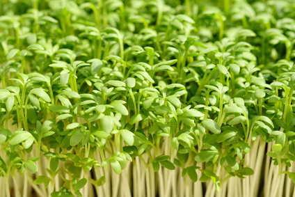 Jardiner malin jardinage conseils et recettes de saison - Refaire son gazon ...