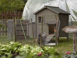 poule jardin