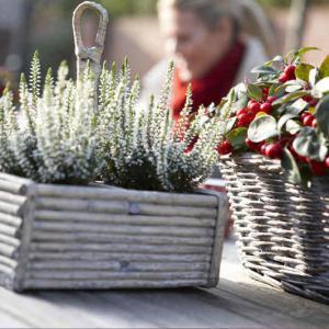 plantes vertes pour balcon et terrasse en hiver. Black Bedroom Furniture Sets. Home Design Ideas