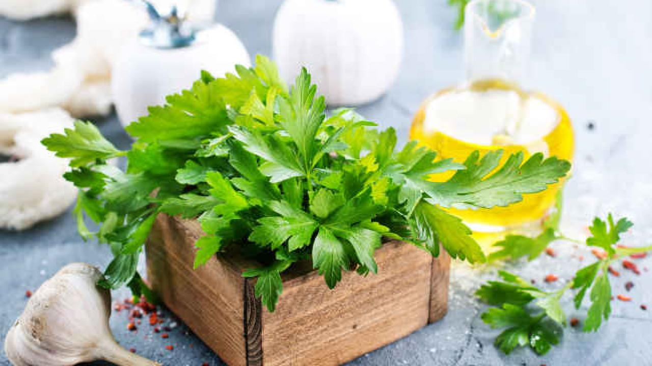 Parsley: multiple health benefits and virtues