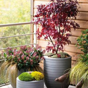automne des id es de plantation pour votre balcon. Black Bedroom Furniture Sets. Home Design Ideas