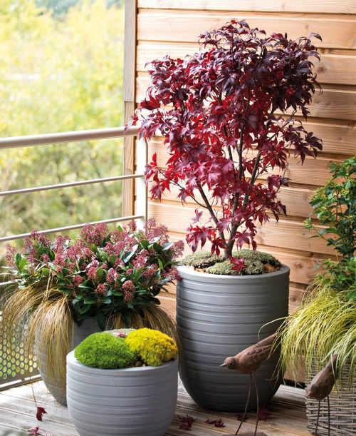 Automne des idées de plantation pour votre balcon