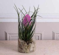 quelles sont les plantes d polluantes voici 3 belles vari t s. Black Bedroom Furniture Sets. Home Design Ideas