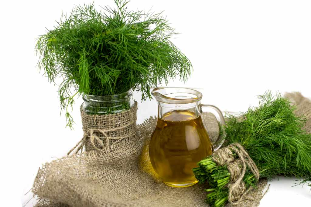 Dill health benefits and therapeutic value