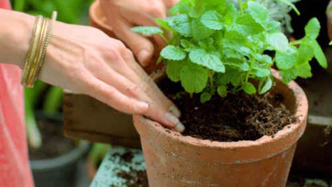Planter Herbes Aromatiques Jardiniere les plantes aromatiques faciles et indispensables