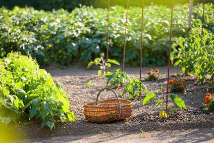 Semis d 39 automne au potager Jardinage en janvier