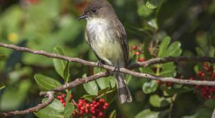 arbuste oiseau
