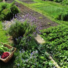 Natural fertilizer for the vegetable patch