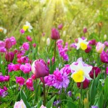 fleurs à bube