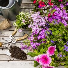 plantes et fleurs du jardin