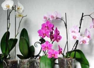 orchidee exposition