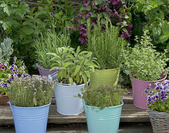 Plantes qui soignent à cultiver