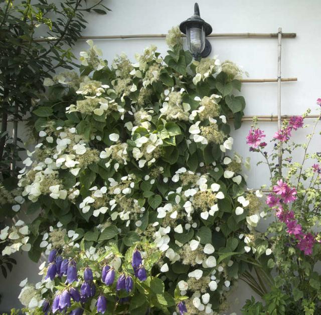 jardiner malin jardinage et recettes de saison. Black Bedroom Furniture Sets. Home Design Ideas