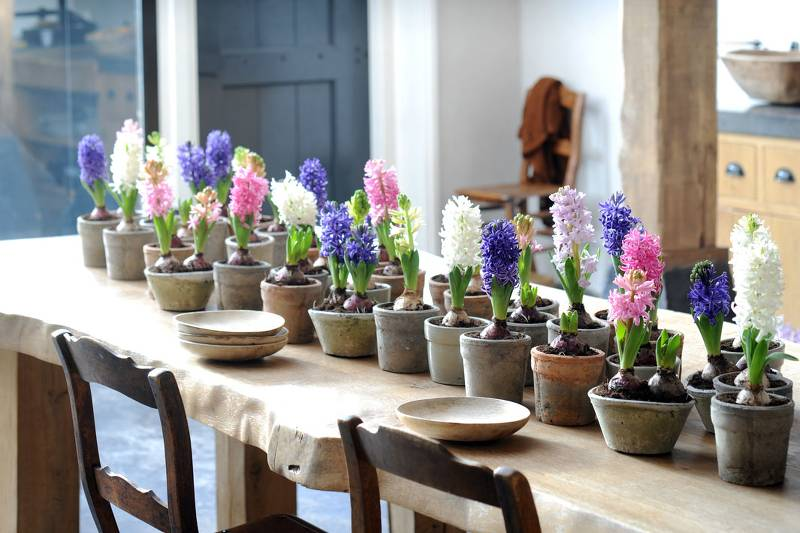 plante interieur hiver couleur