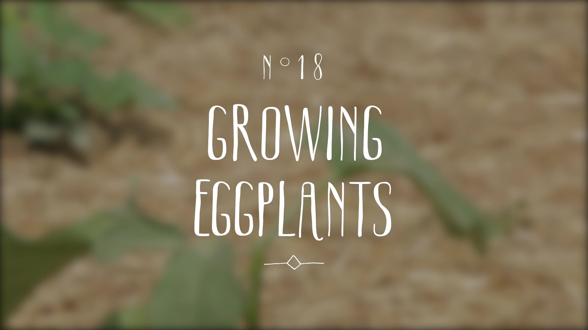 A video on growing eggplant