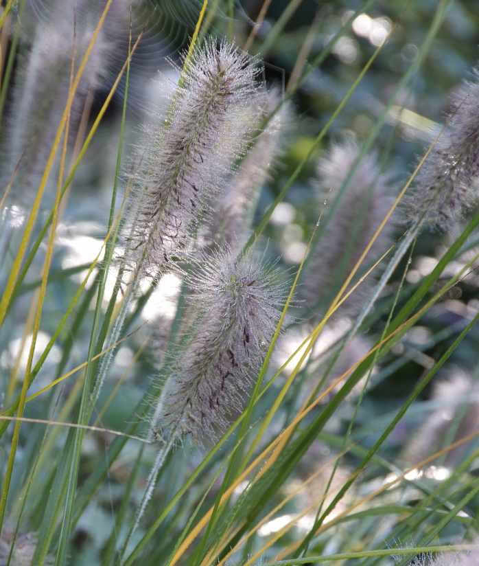 Gramin es des plantes faciles d 39 entretien for Grande plante d interieur facile d entretien