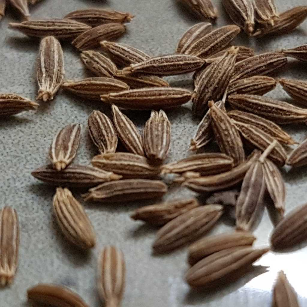 Cumin health benefits and therapeutic value