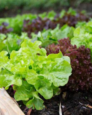 Jardiner malin jardinage plantes et sant recettes de for Www jardiner malin fr