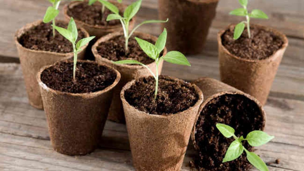 Quelle Salade Planter Maintenant semis de février et mars, en intérieur et extérieur