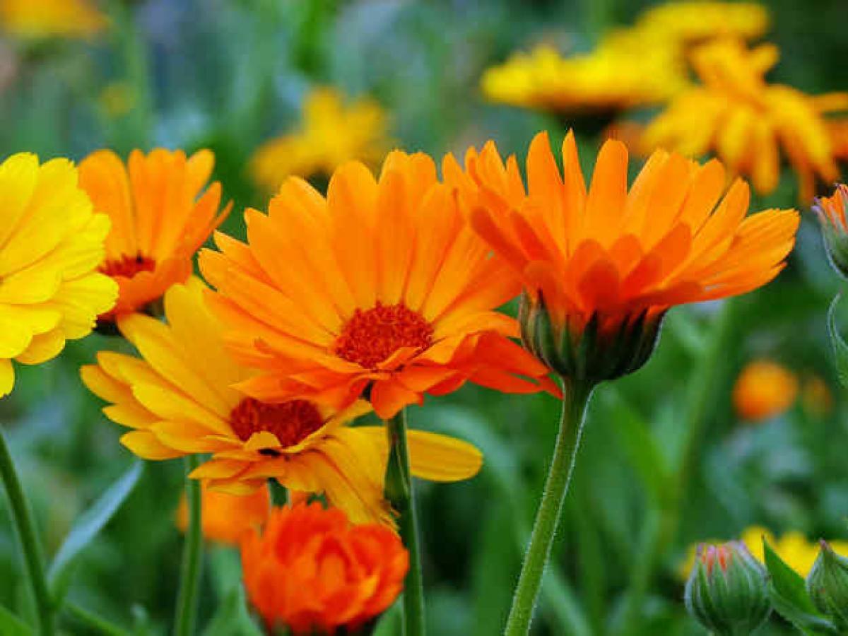 Preocupación: siembra y mantenimiento de flores a lo largo de las estaciones.