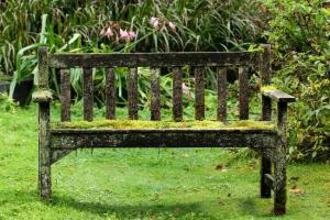 mousse pelouse gazon jardin supprimer