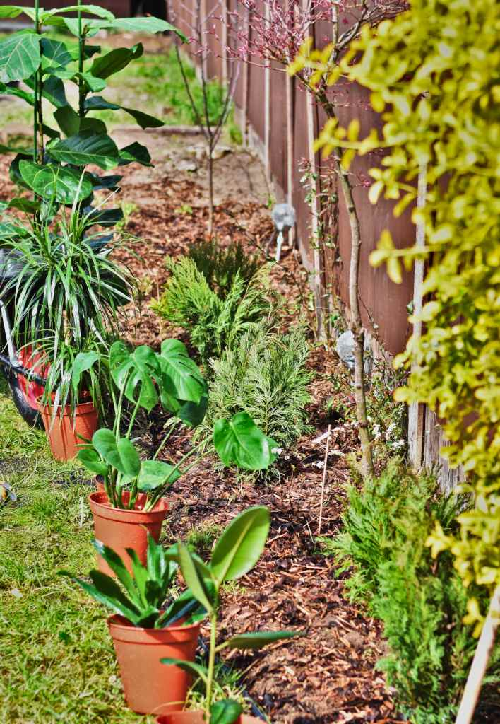 Pots and growing beds describe the work that can be done in the garden in June.