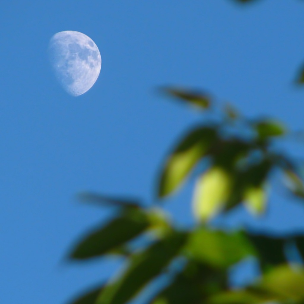 What if we gardened with the moon?