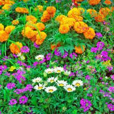 plantes tendance