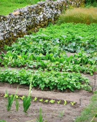 Légumes faciles pour potager débutant