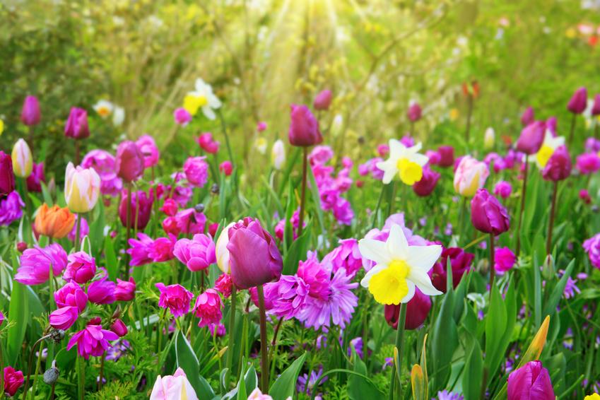 bulb-flowers