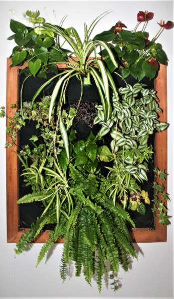 Living Green Indoor Plant Wall As A Vertical Garden