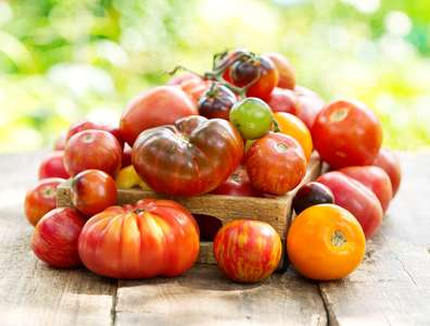 tomate variété