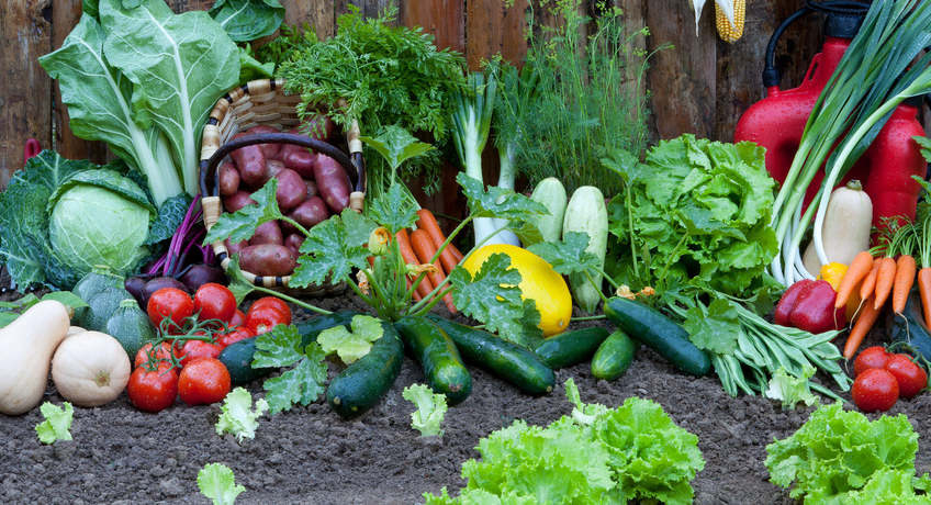 vegetable-patch-vegetables