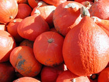 Ripe red kuri squash harvest hoarded together