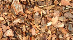 Bark from maritime pine.