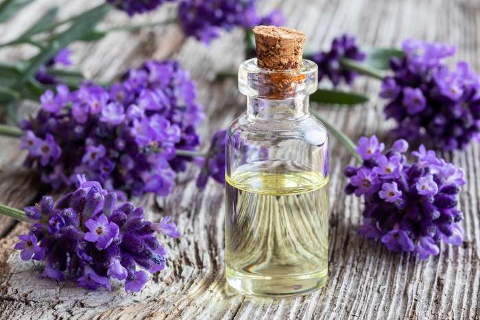 Lavender: health benefits and virtues